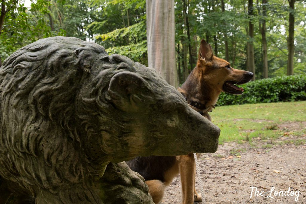 Dog near bear sculpture at Claremont Garden