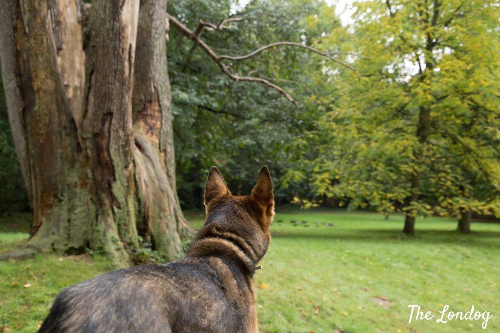 Dog near ha-ha at National Trust garden