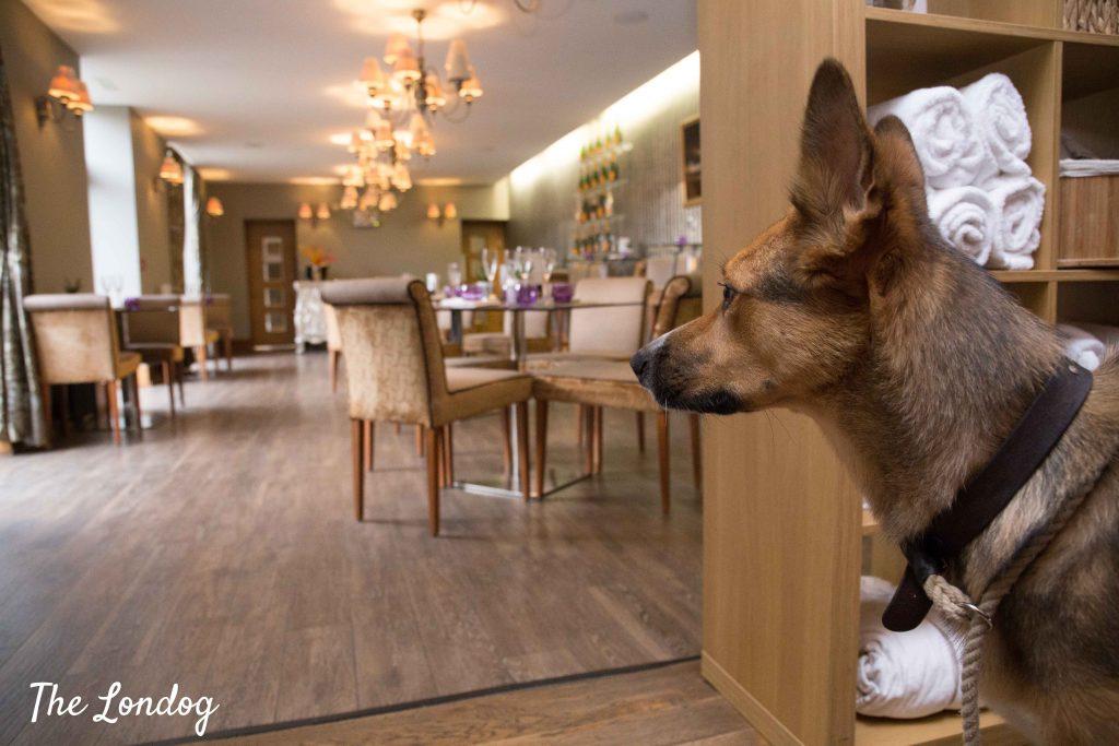 Dog at bar area at Elan Spa