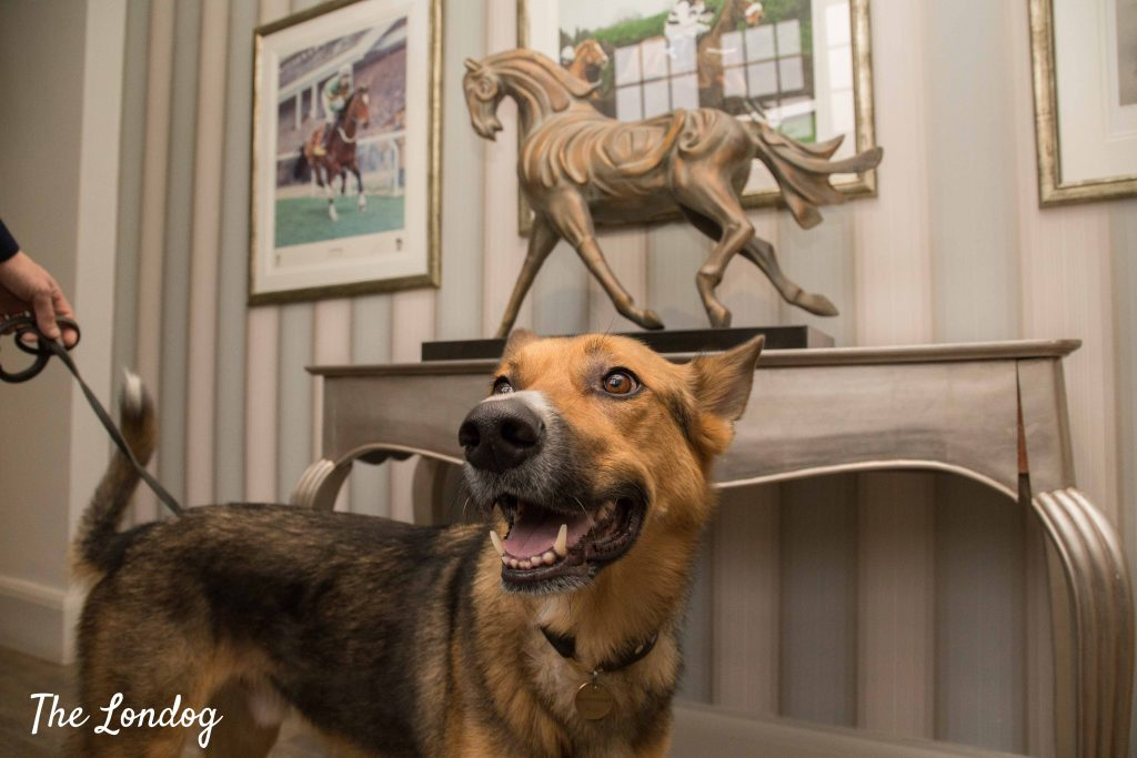 Large dog near horse statue at hotel