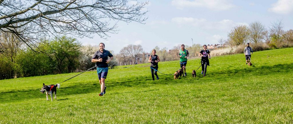canicross group running