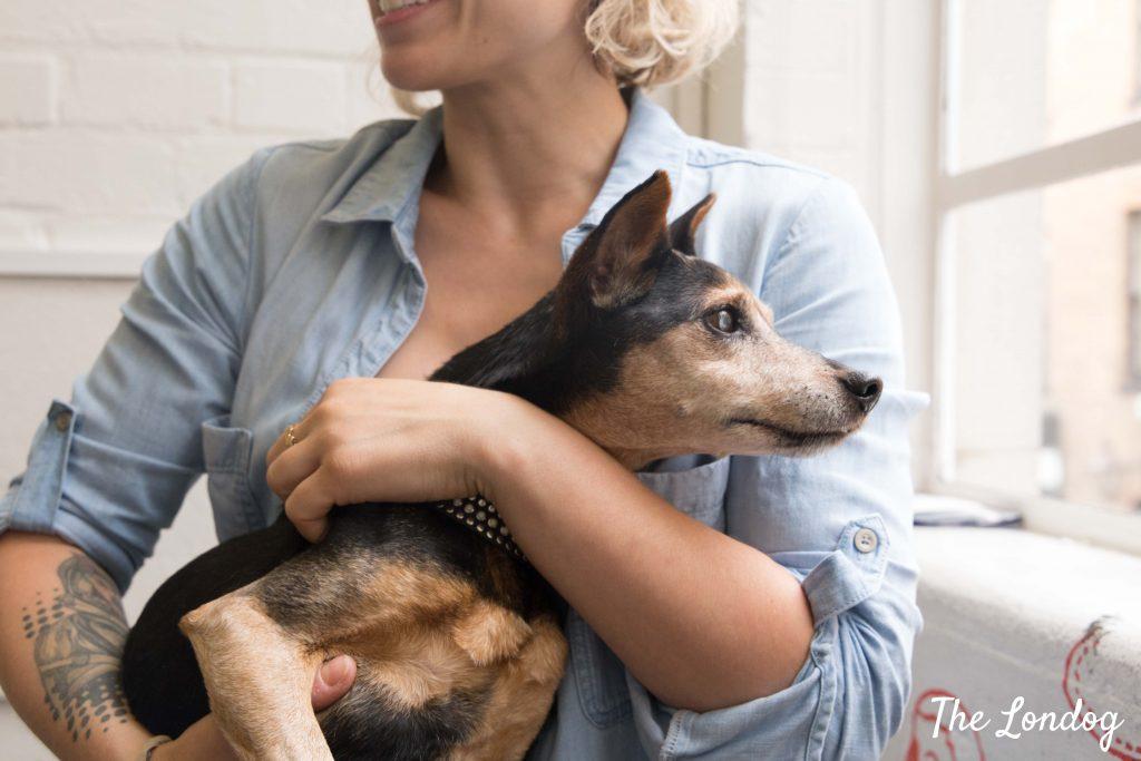 Little dog in owner arm at Wieden Kennedy