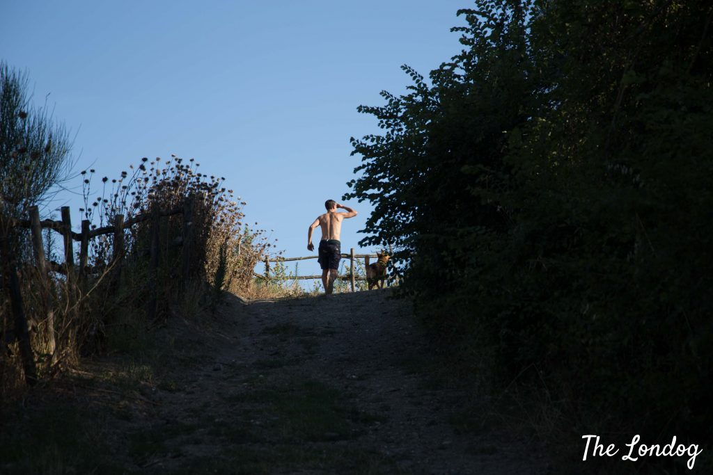 Man running on a hill with his dog on summer day