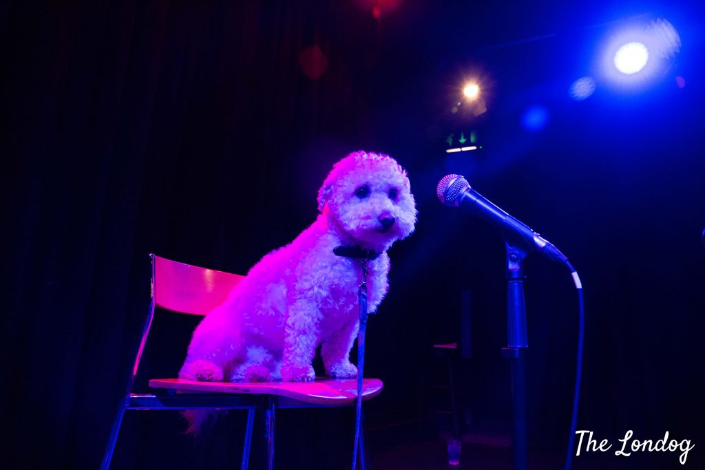 Dog on stage with microphone at Barking Mad Comedy Club
