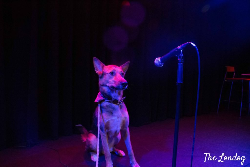 Dog with the mic