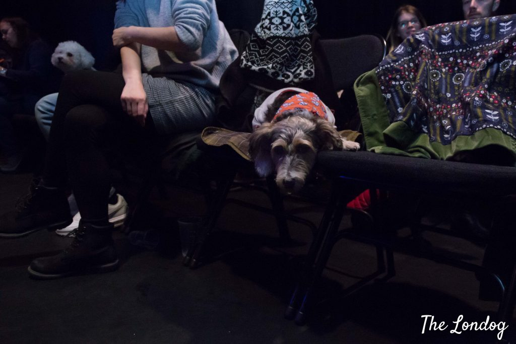Dog sleeping on chair at comedy show