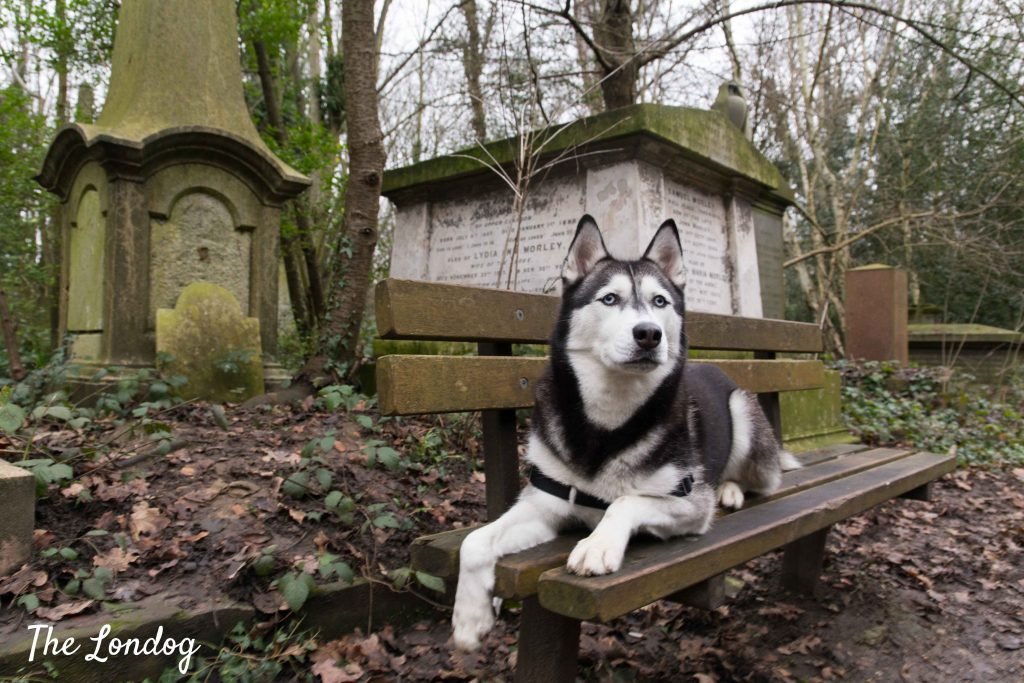Dog on bench at Abney Park Cemetery