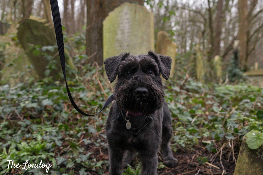 Dog among graves