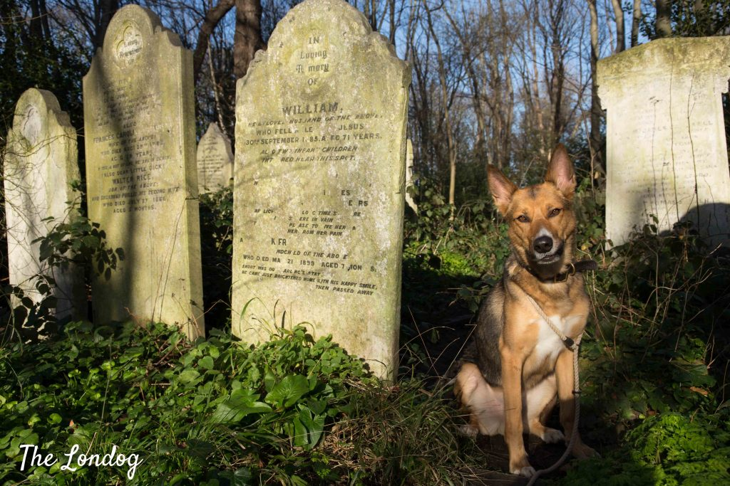 Dog near stone graves at Tower Hamlets Cemetery Park