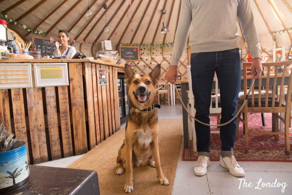 Dog sitting at the Yurt Cafe