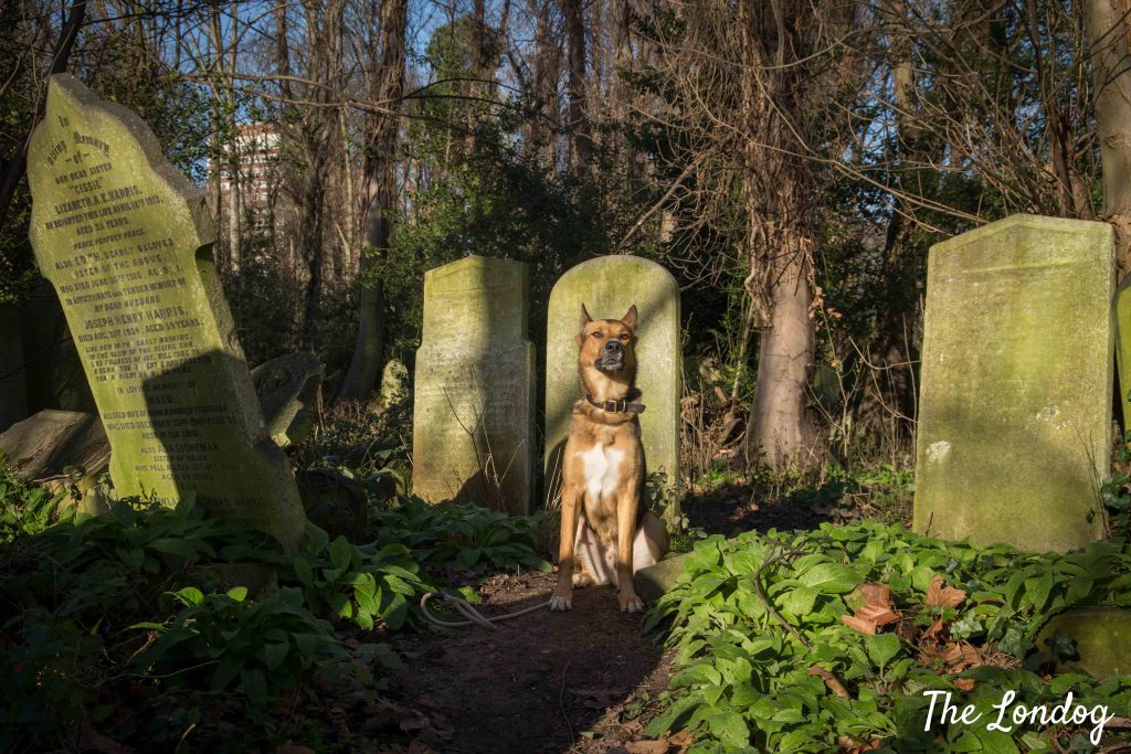 Large dog sits in the sun among grave headstones