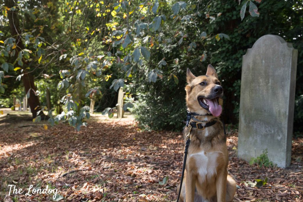 Dog at Barnes Old Cemetery