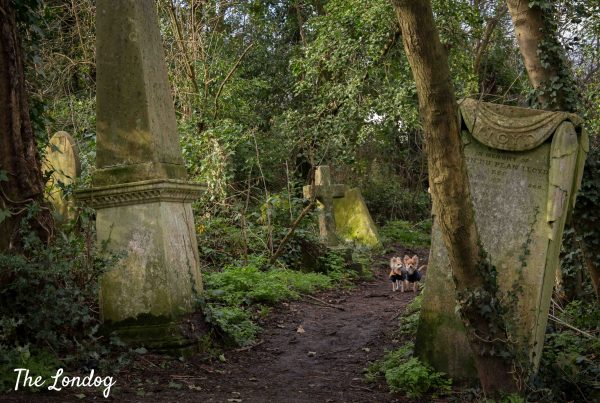 Photo of two small dogs walk on a path among grave headstones at dog-friendly cemetery in London