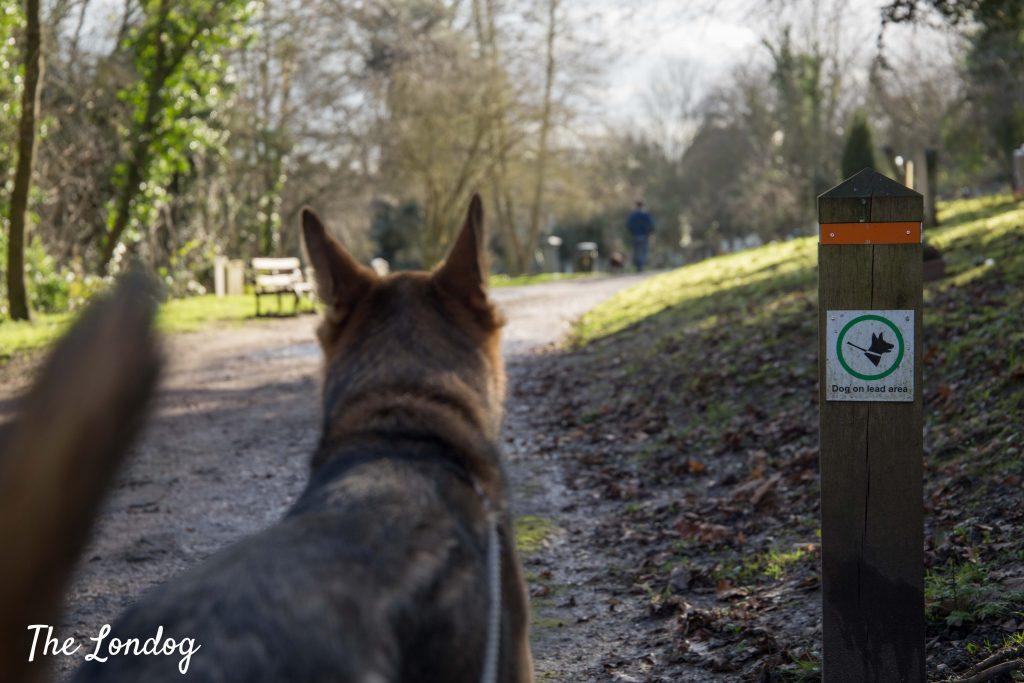 Dog near sign of dogs on lead at Nunhead Cemetery