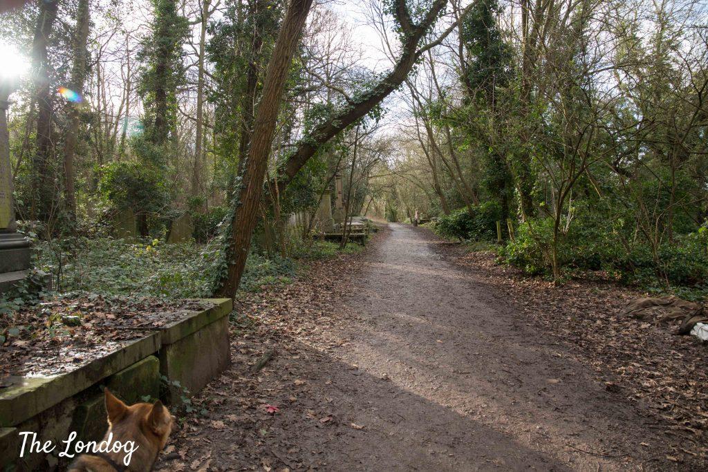 Paths at dog-friendly Nunhead Cemetery