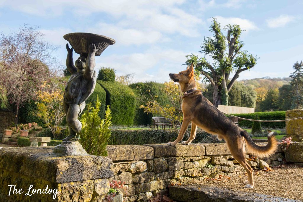 Dog in garden of hotel with statue