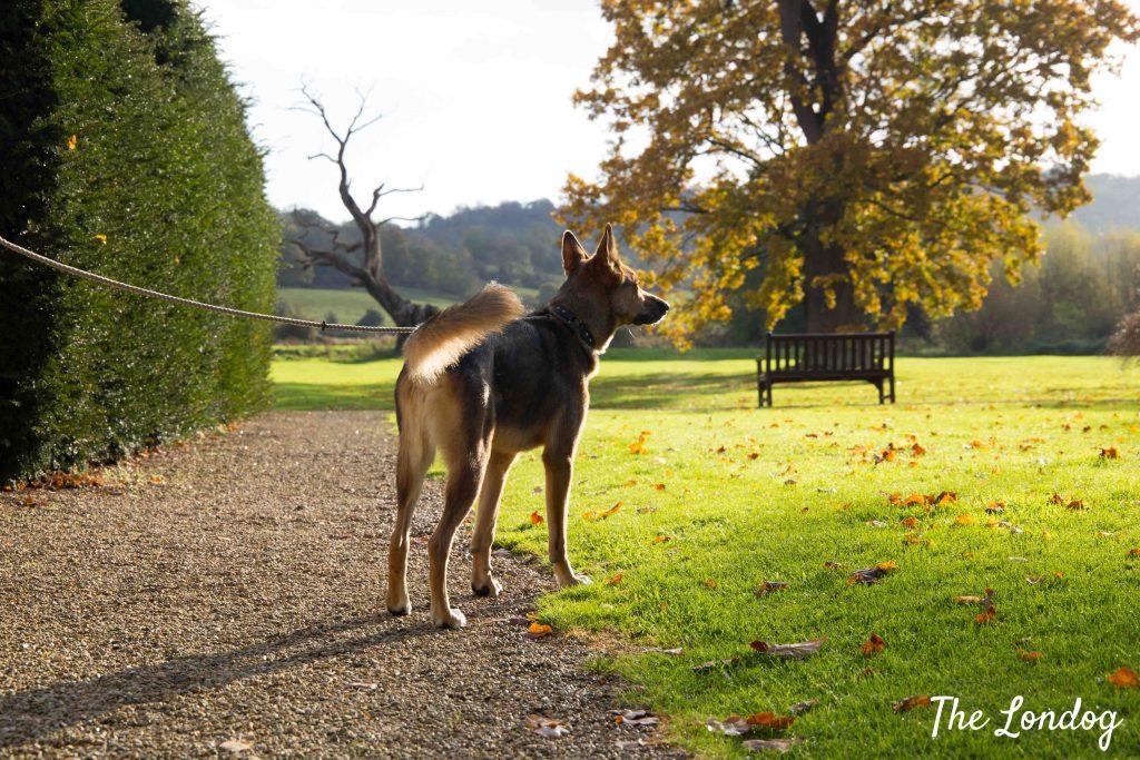 Dog at hotel garden