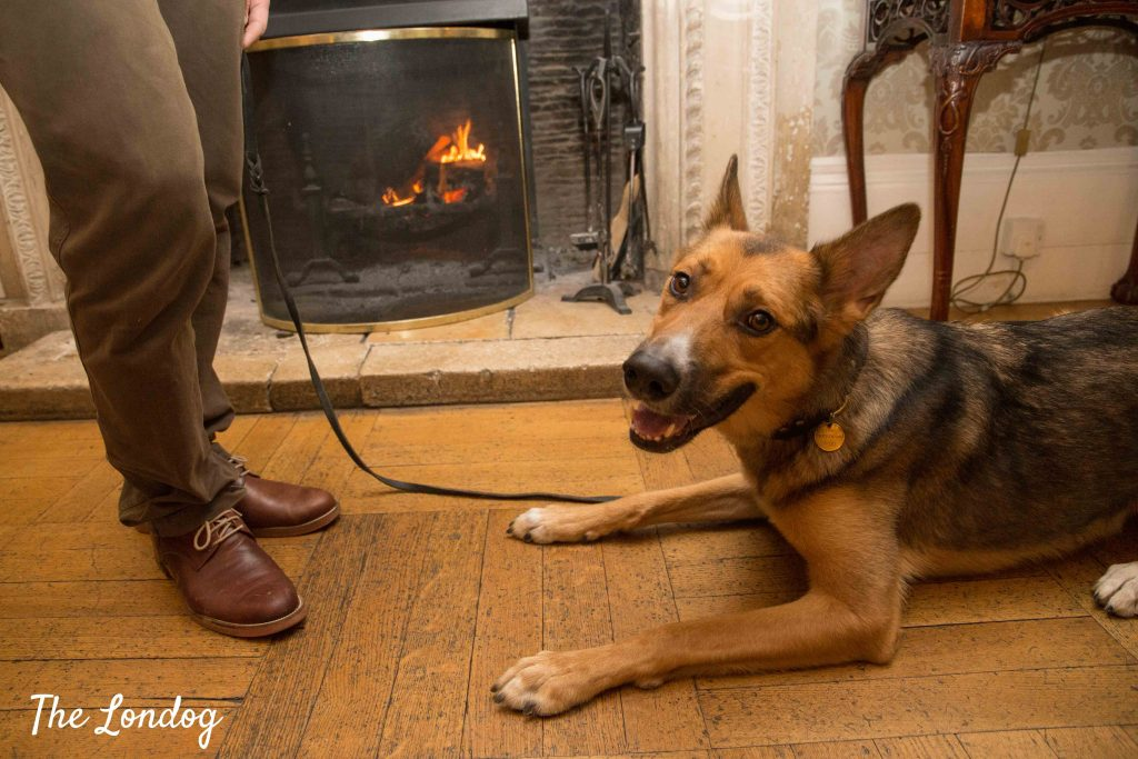 Dog near fireplace