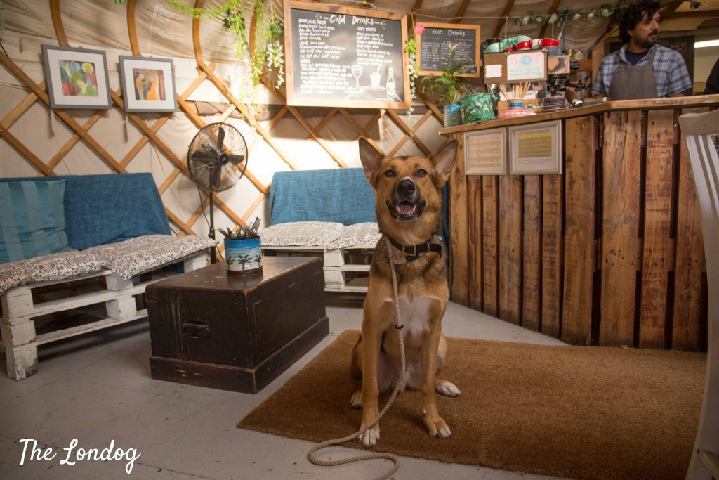 Large dog sits inside Yurt Cafe in Limehouse
