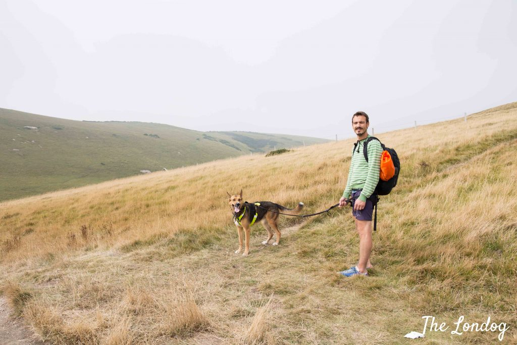 Dog and owner on the coastal path in the summer