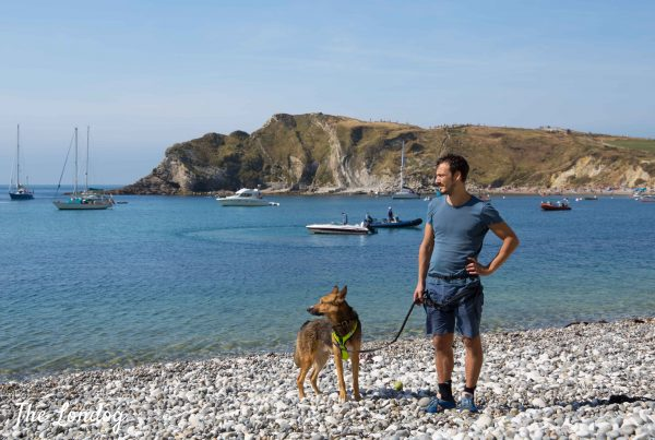 Man and large dog on pebble beach at Lulworth Cove on sunny day