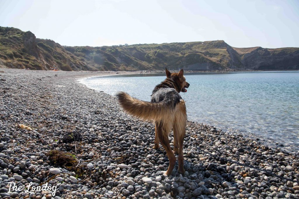 Dog at dog-friendly Lulworth Cove beach