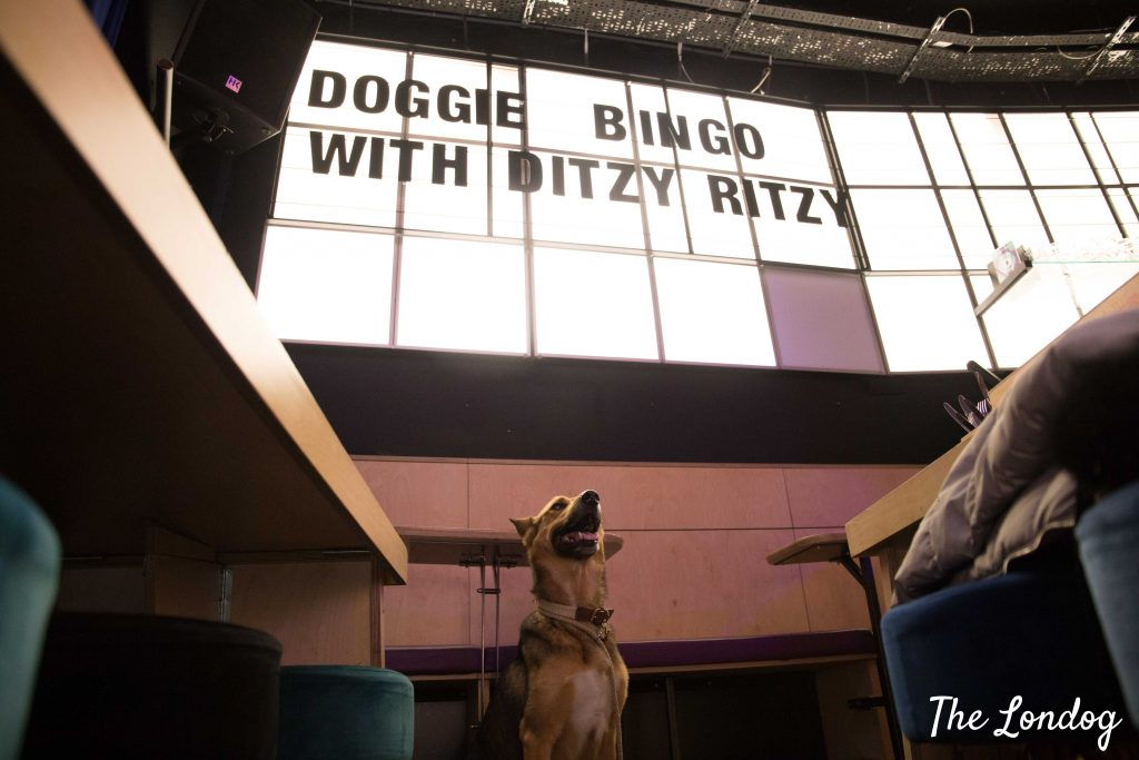 Light panel doggie bingo