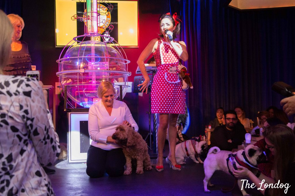 Doggie bingo show