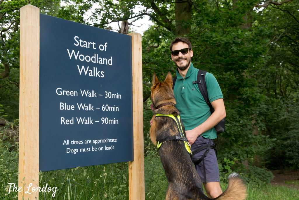 Dog and man standing next to start of Hatfield House woodland walk