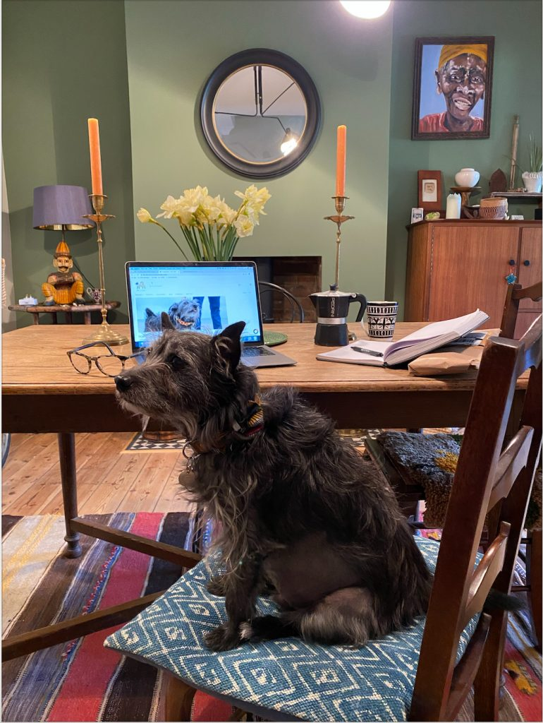Wolf dog working from home