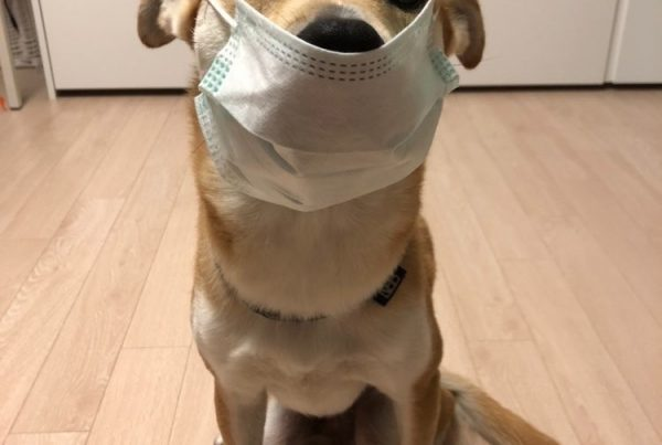 Rescue dog with face mask in South Korea during lockdown