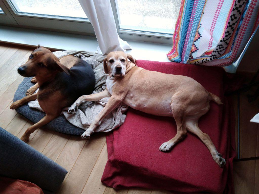 Dogs in lockdown Brussels