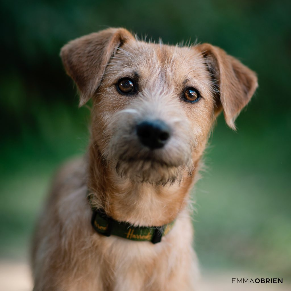 Foster dog Emma O Brien