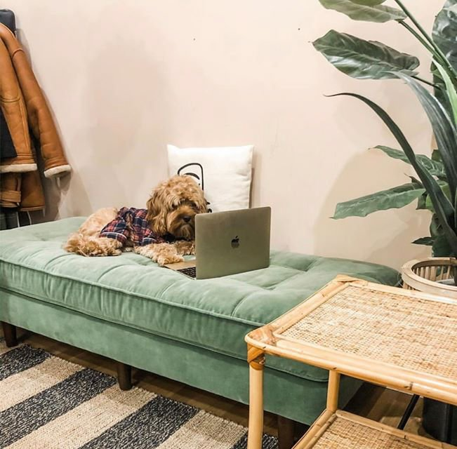 Small dog on sofa looking at screen