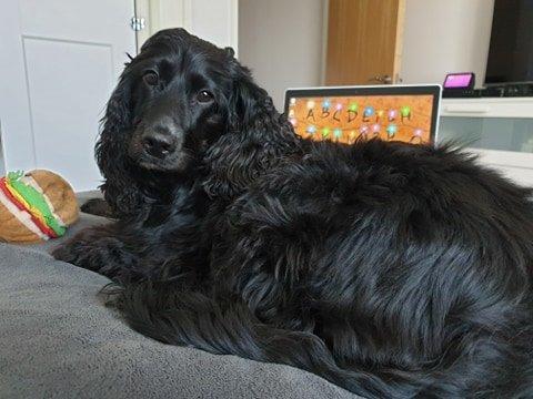 Black dog on bed
