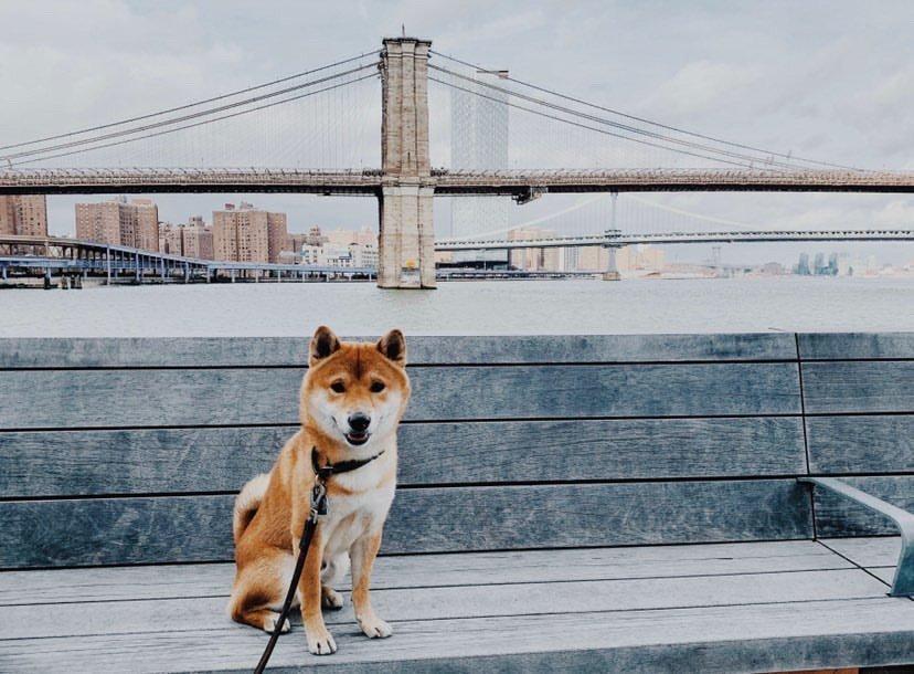 Dog in NYC near bridge