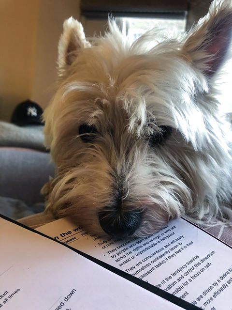 Dog working from home puts head on papers