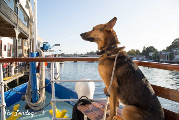 Dog sits on bench at bow on Turks Launch Yarmouth Belle