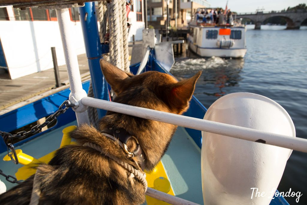 Dog peeks from bow on dog-friendly Turks Launch boat