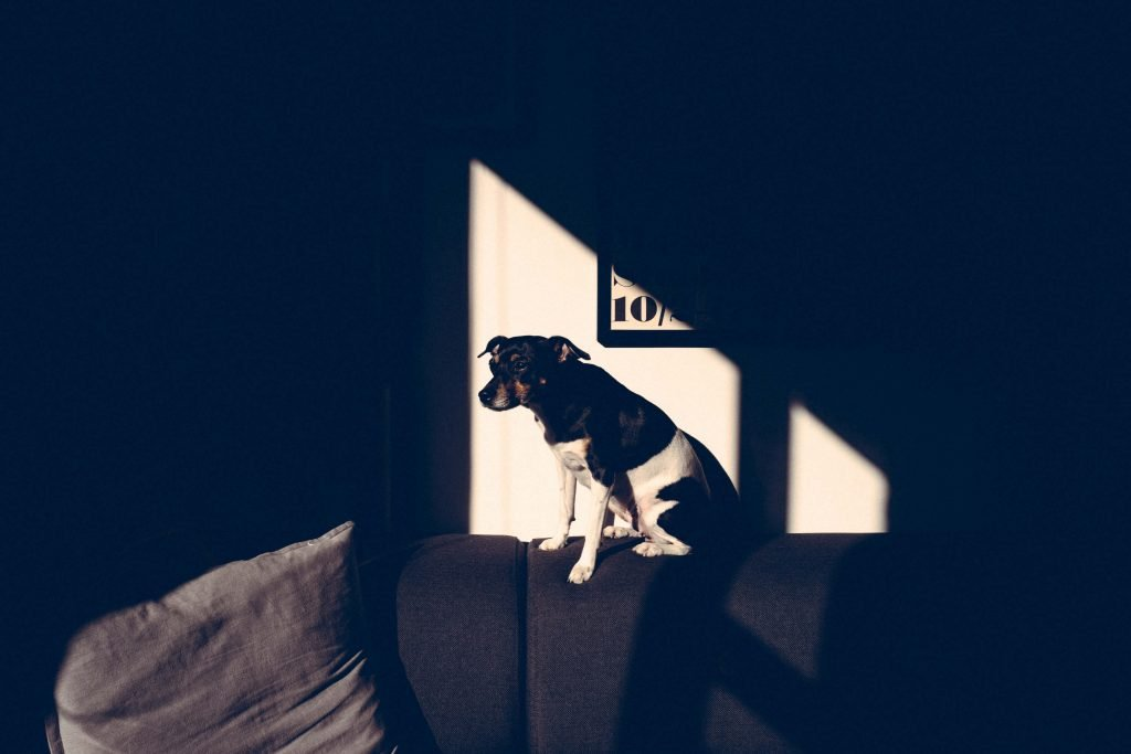 Dog at home on sofa ray of light