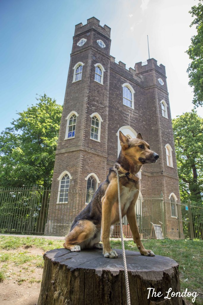 Dog outside Severdroog Castle in London