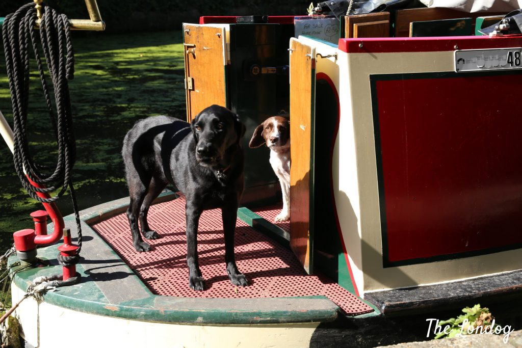 Dogs on boat on Regent's Canal