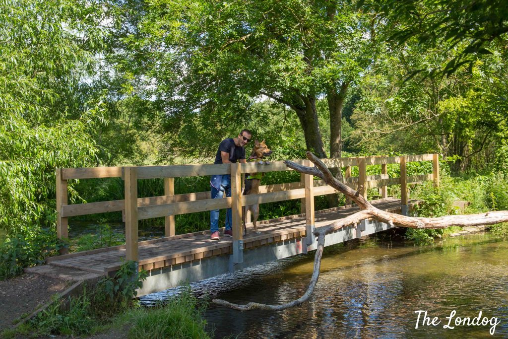 man and dog on wooden bridge on river Chess
