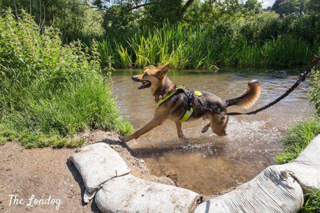 Dog having a splash