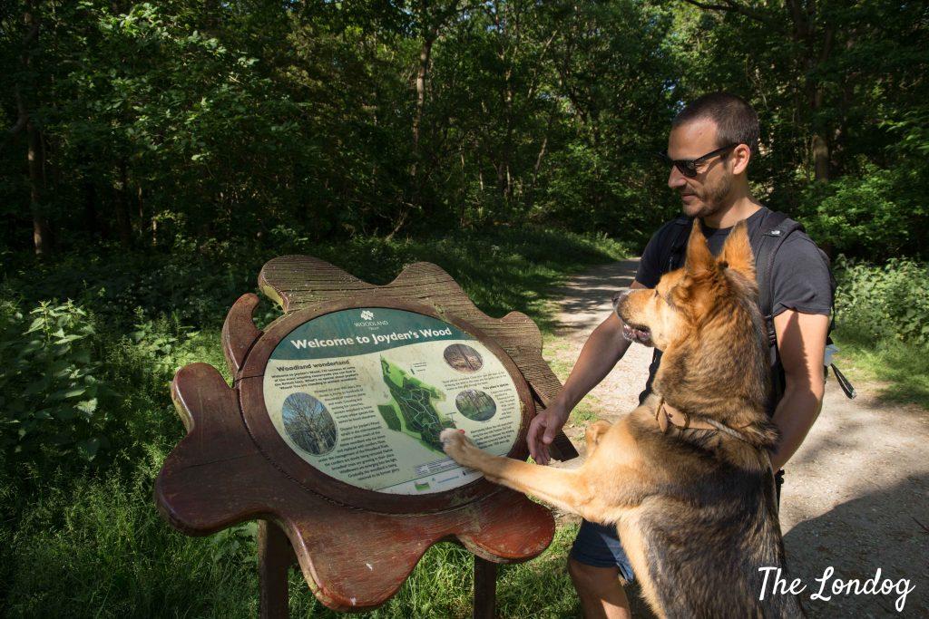 Dog and man look at Joyden's Wood signage