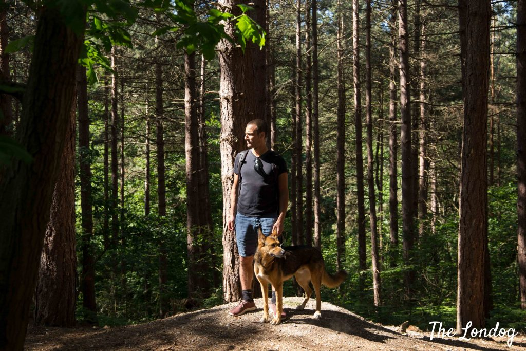 Man and dog in the woods