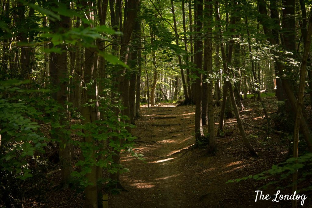 Joyden's Wood track with rays of sun