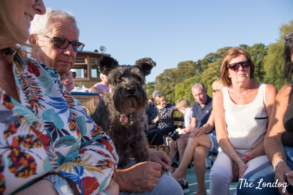 Small dog on lap on deck of Yarmouth Belle by Turk Launches