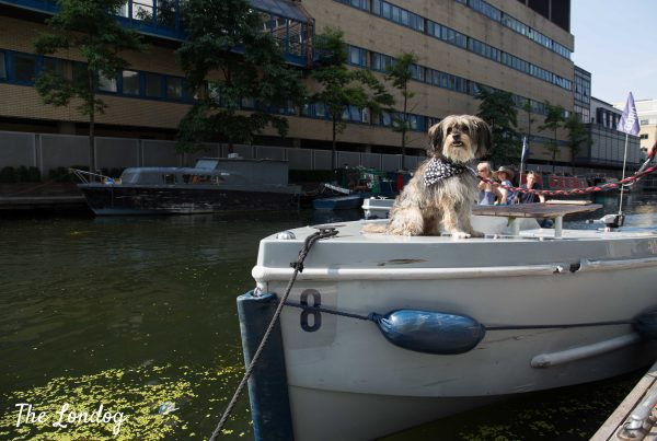 Dog on goboat at merchant square