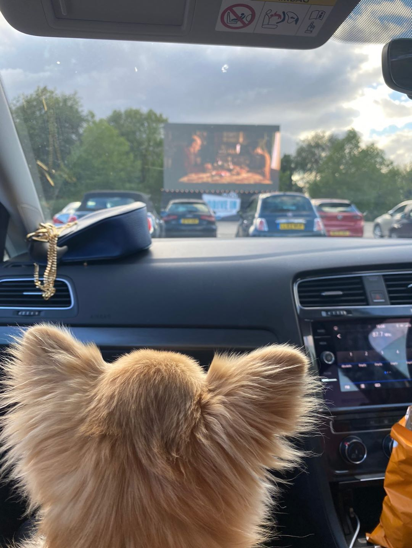 Dog in car at dog-friendly drive-in cinema in London